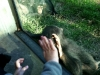zoo-chimp-hand