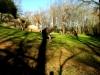 zoo-girraffe