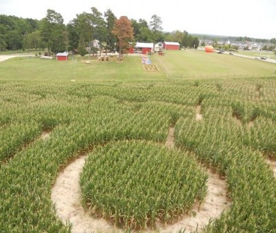 Green Acres Farm: It's Corn Maze Time!