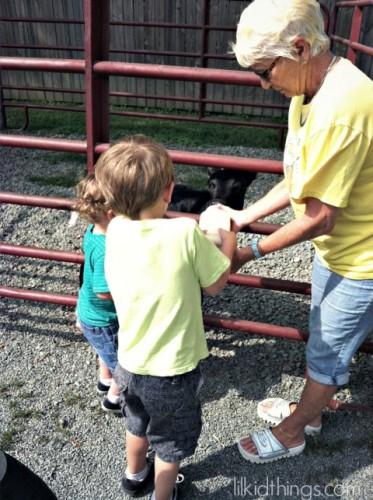 HC calf feeding