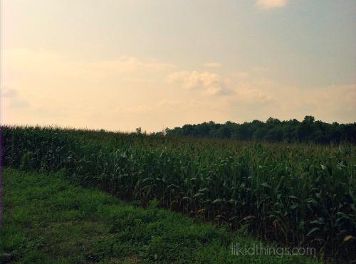 hc field