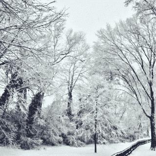 yard snowy trees