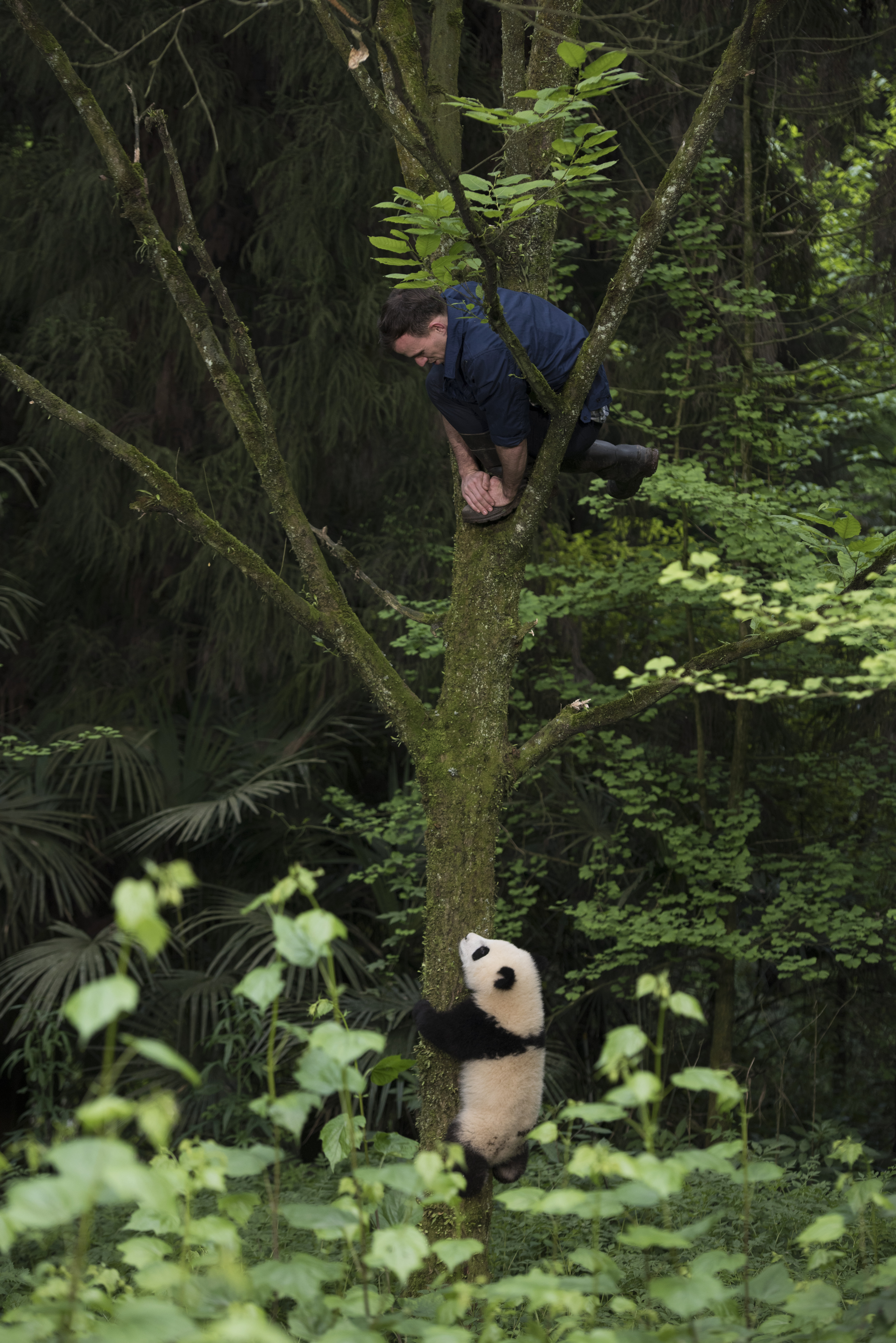 Pandas 3D screen still man in tree