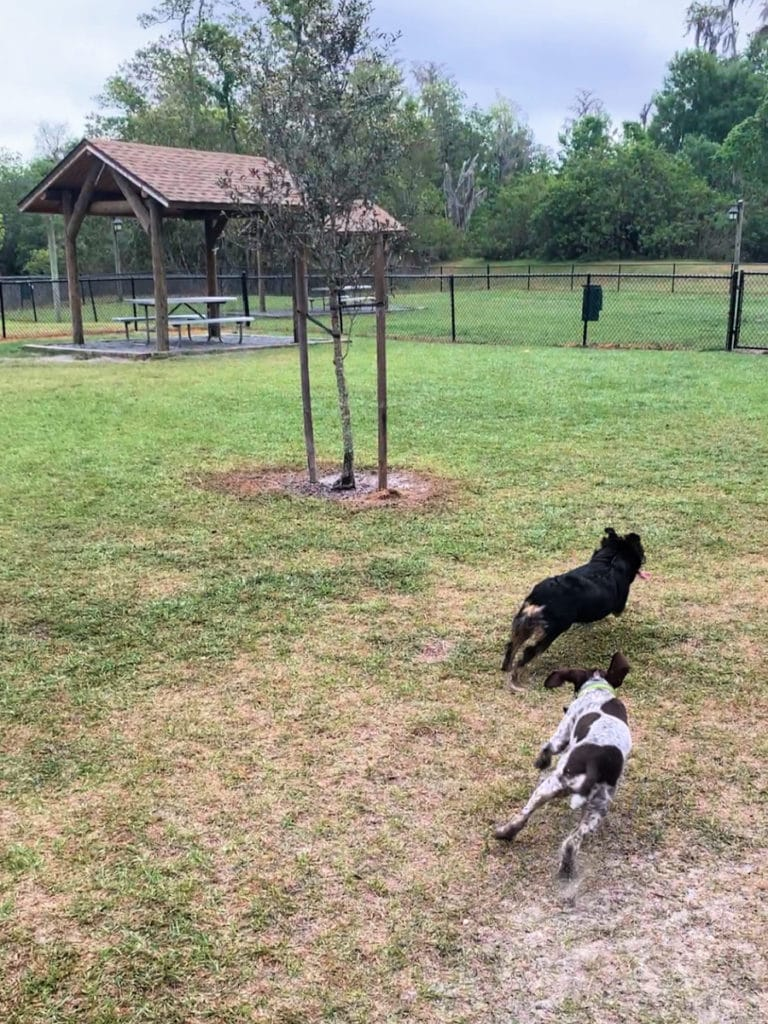 Small Dog Park Fort Wilderness